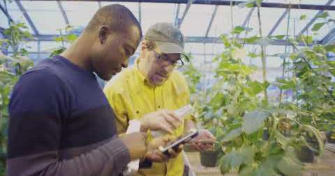 Michigan State University - David Kramer-Plant Research